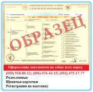 Registration of documents for dogs. Puppy cards, Pedigrees. TO